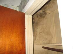 home inspection mold like substance in closet